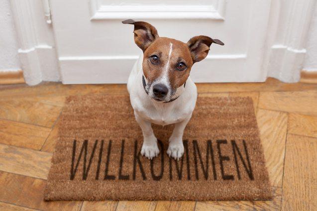 Angst Alleine Zu Hause  Hunde allein lassen geht das