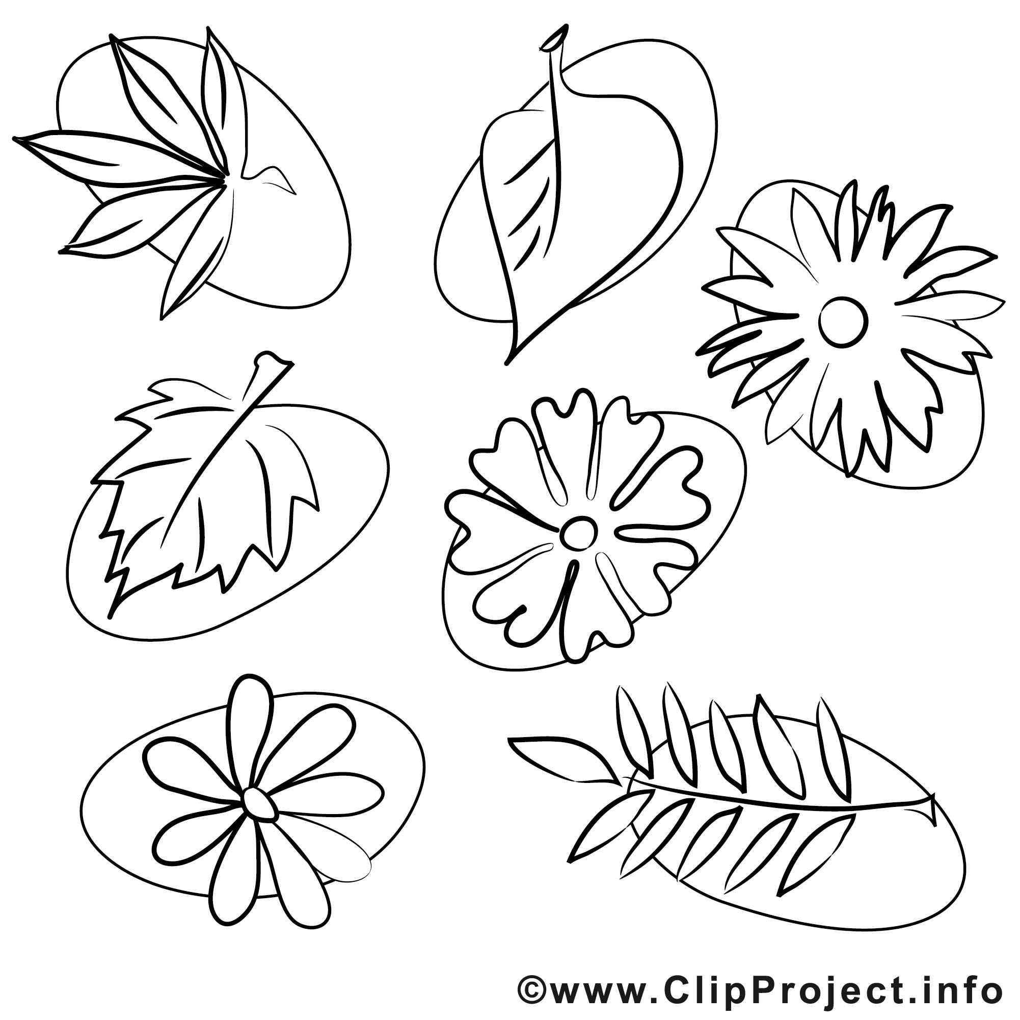 Ausmalbilder Blätter  Blaetter Malvorlagen