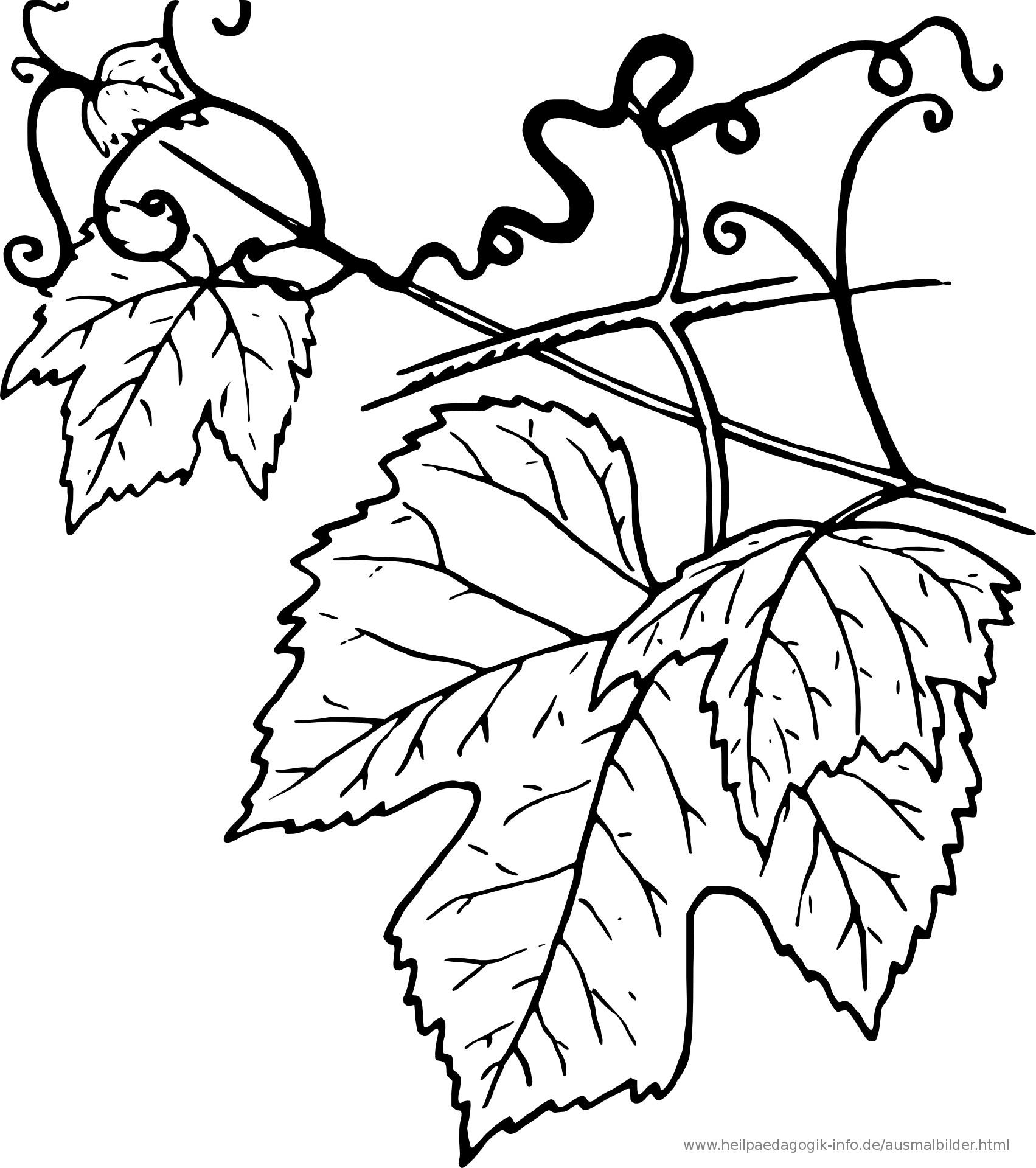 Ausmalbilder Blätter  Ausmalbilder Blumen Bäume Blätter