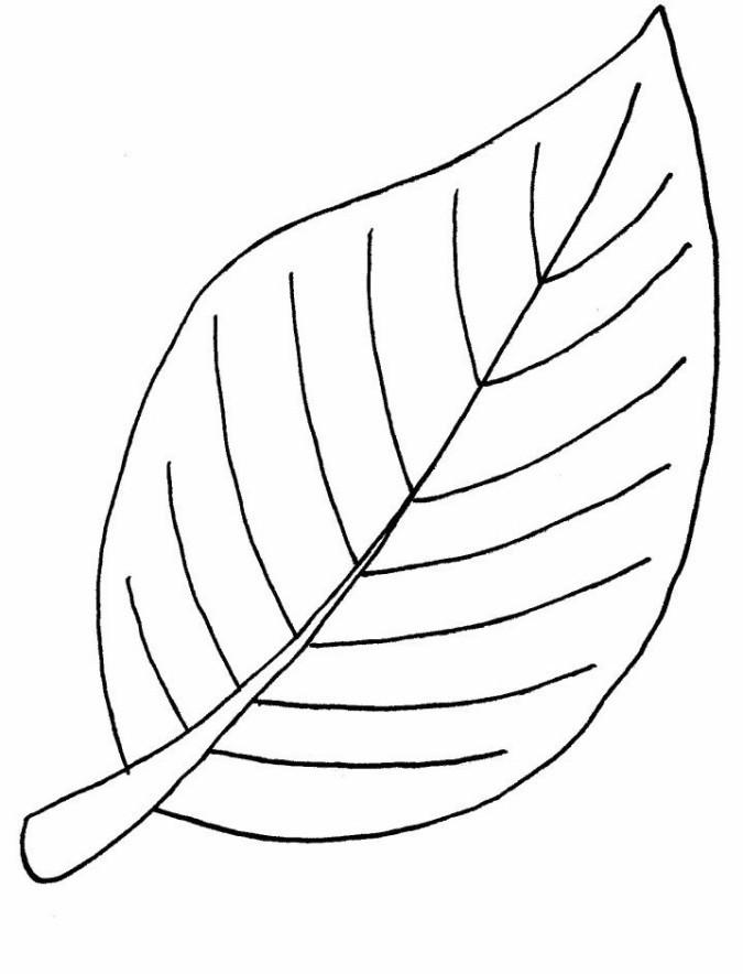 Ausmalbilder Blätter  Schöne Malvorlagen Ausmalbilder Blätter ausdrucken 2