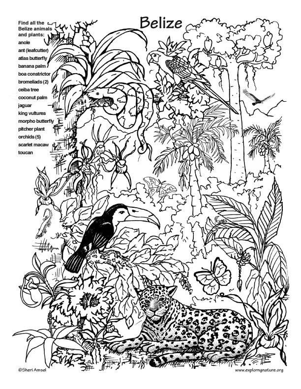 20 Der Besten Ideen Für Ausmalbilder Dschungel Beste Wohnkultur