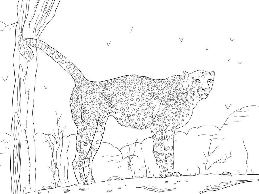 20 ideen für ausmalbilder gepard  beste wohnkultur