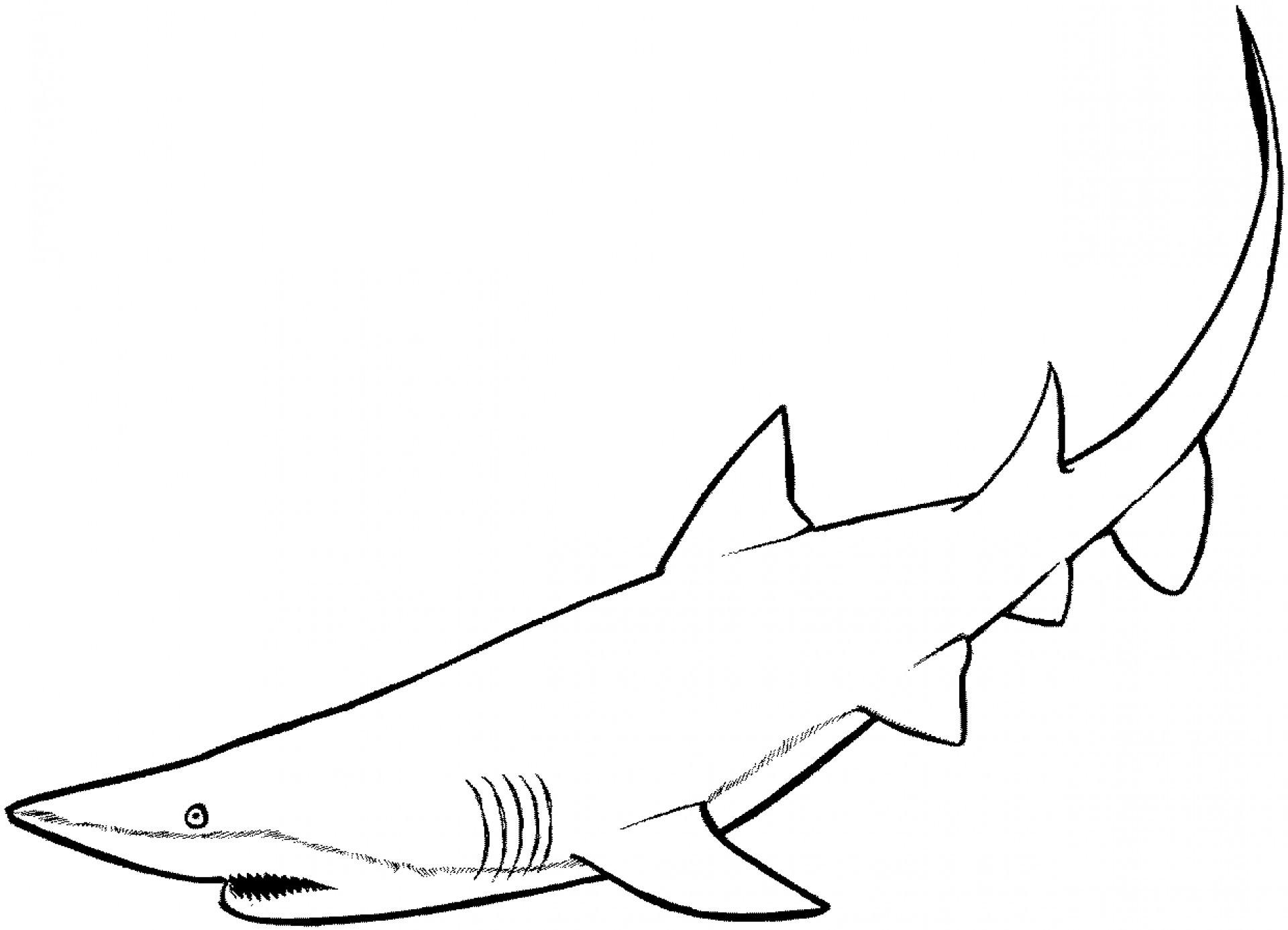 beste 20 ausmalbilder haie  beste wohnkultur bastelideen