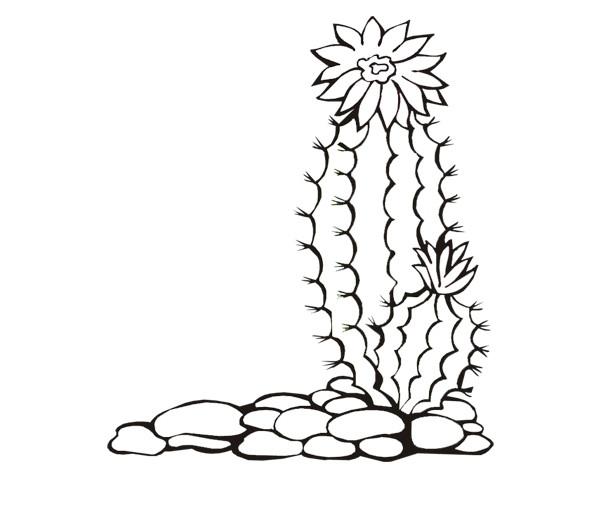 Ausmalbilder Kaktus  Ausmalbilder Malvorlagen – Kaktus kostenlos zum