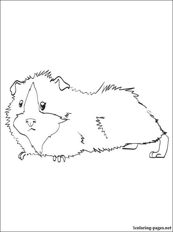 20 ideen für ausmalbilder meerschweinchen  beste