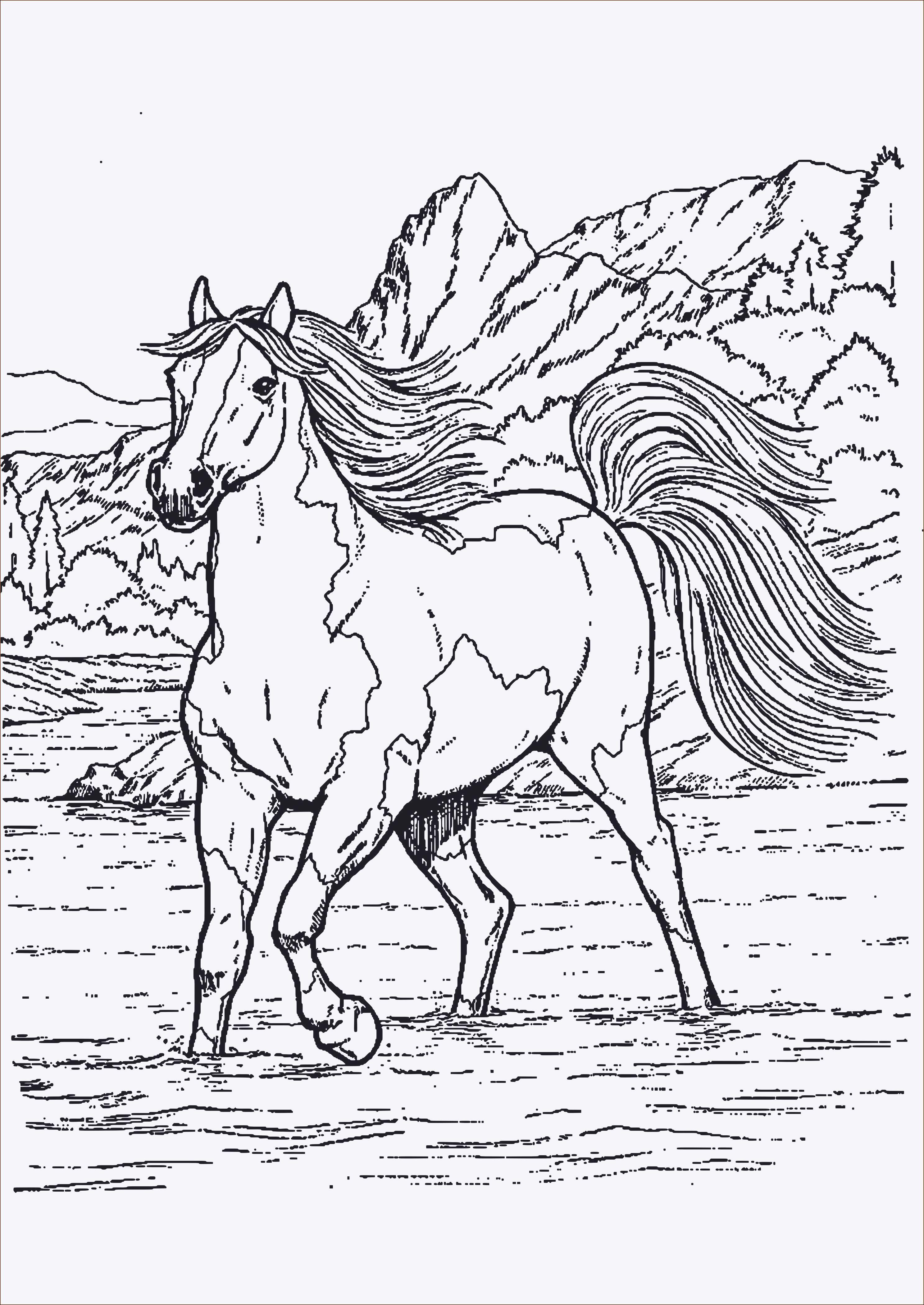 Ausmalbilder Pferde Turnier  Pferde Ausmalbilder Kostenlos Ausmalbildertv