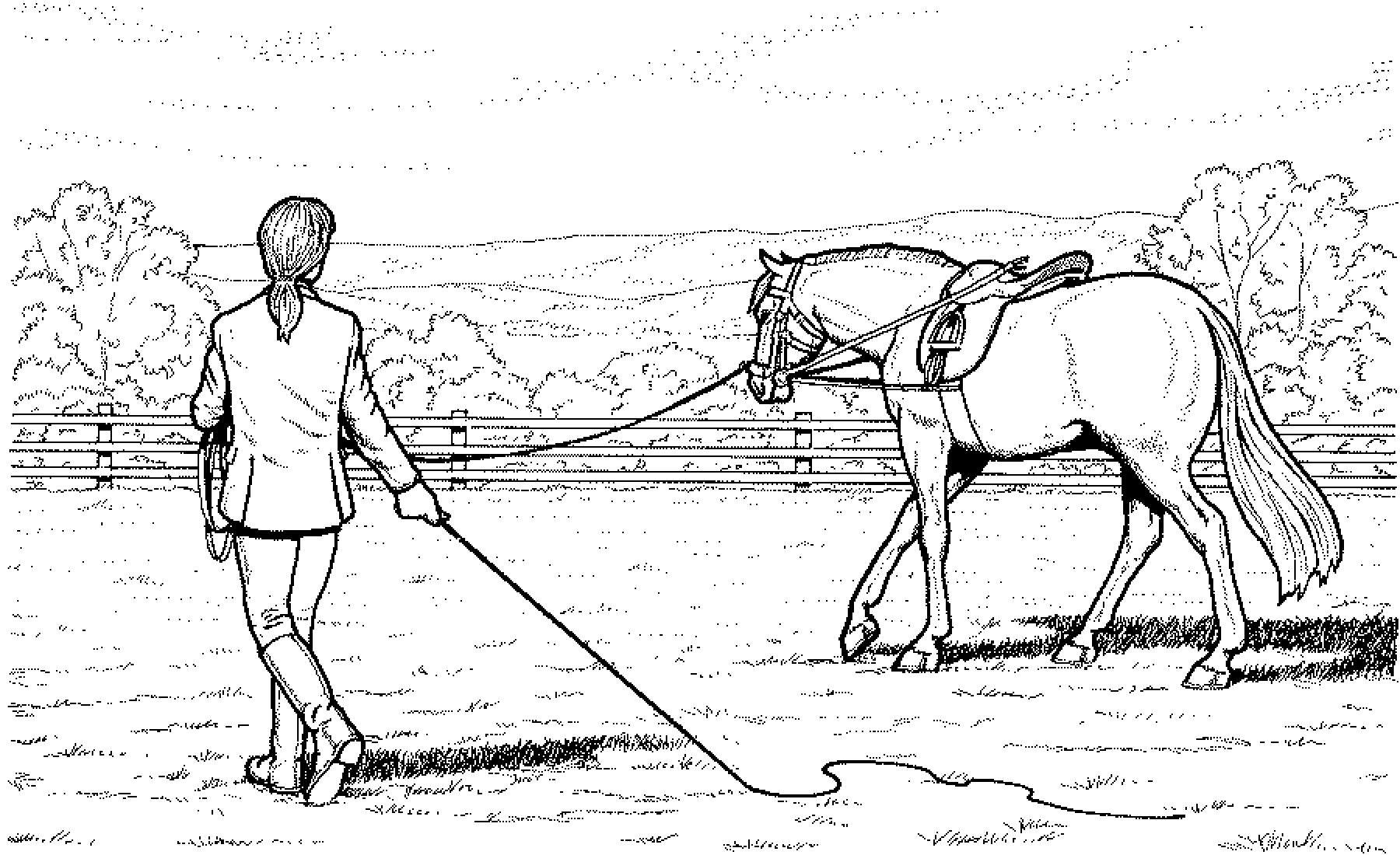 Ausmalbilder Pferde Turnier  Ausmalbilder Pferde Mit Reiterin Ausmalbilder Pferde