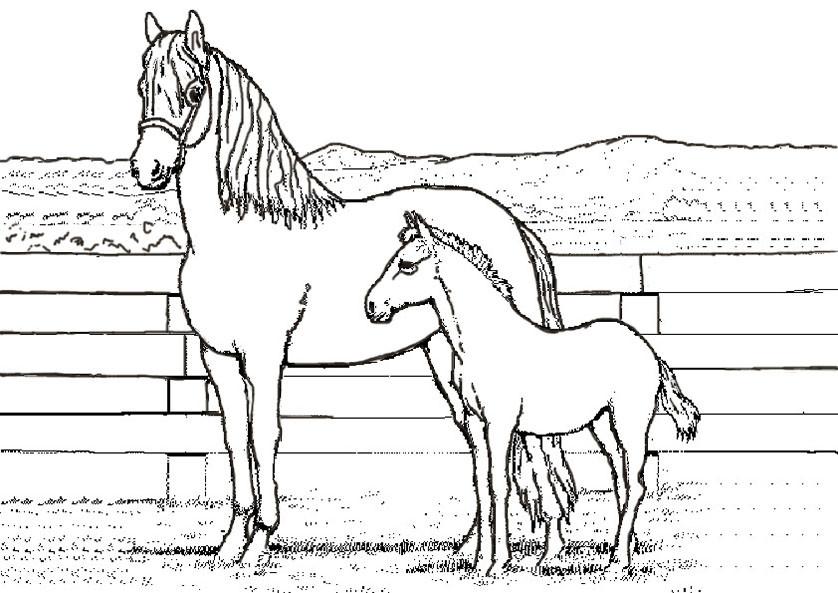 Ausmalbilder Pferde Turnier  Ausmalbilder mandala pferde kostenlos Malvorlagen zum