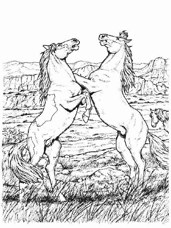 Ausmalbilder Pferde Turnier  ausmalbilder pferde 25 – Ausmalbilder für kinder …