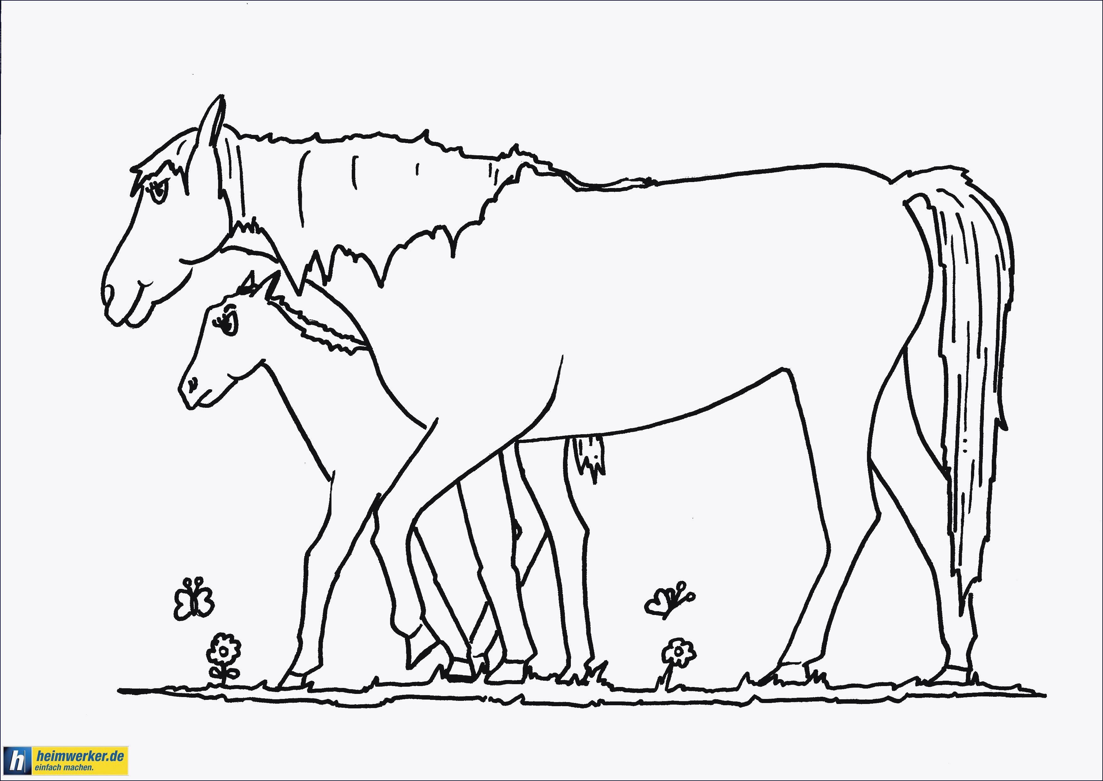Ausmalbilder Pferde Turnier  Ausmalbilder Pferde Turnier