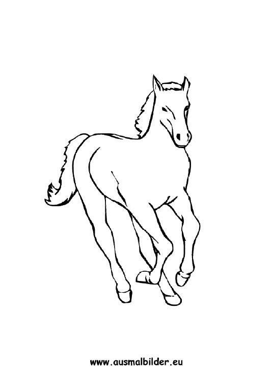 Ausmalbilder Pferdekopf  Ausmalbilder Pferd Pferde Malvorlagen
