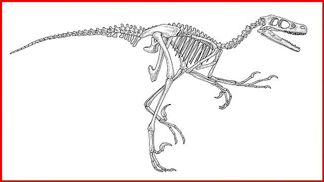 dino skelett malvorlage  coloring and malvorlagan
