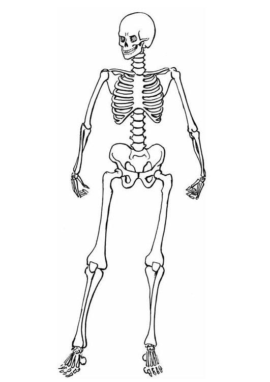 die 20 besten ideen für ausmalbilder skelett  beste