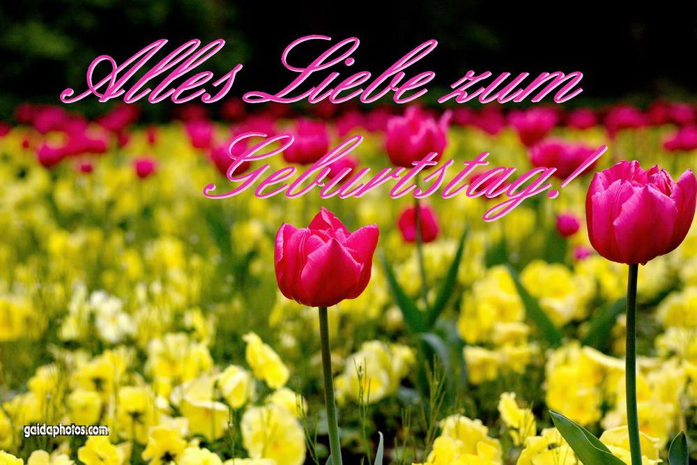 Blumen Geburtstag Bilder Kostenlos  Lustige Karten zum Geburtstag gaidaphotos Fotos und Bilder
