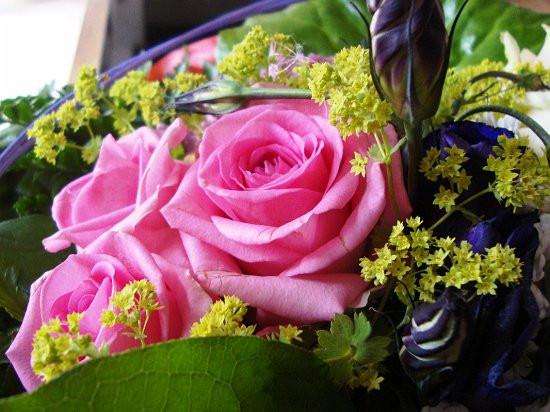Blumen Geburtstag Bilder Kostenlos  Blumen kostenlose Rosenbilder Blumenbilder Blumen