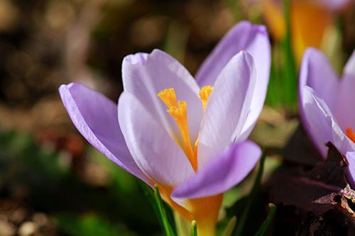 Blumen Geburtstag Bilder Kostenlos  Blumen Bilder kostenlos Naturfotos lizenzfrei