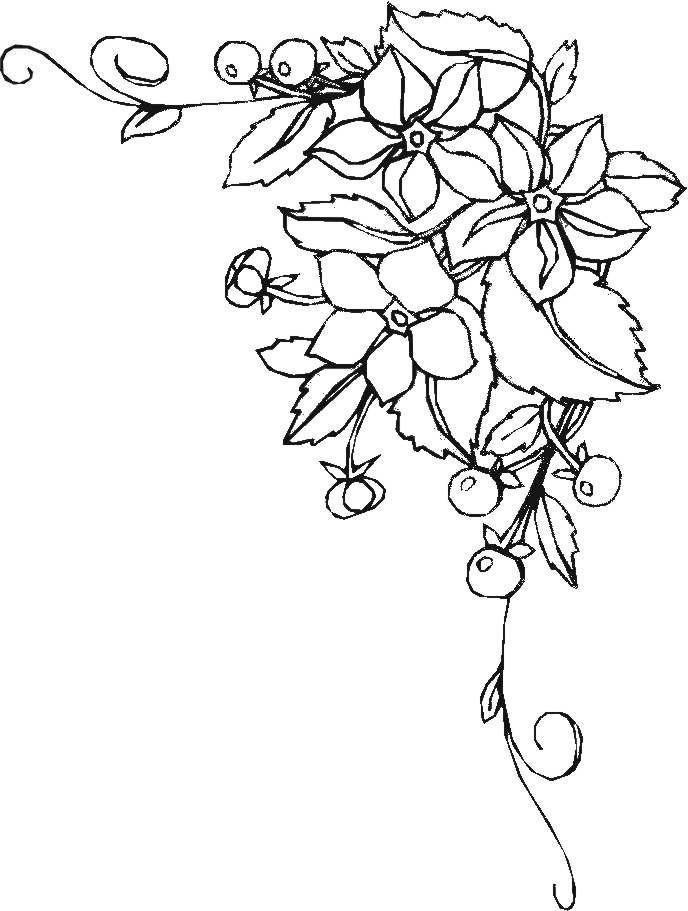 Blumenranken Ausmalbilder  Ausmalbilder blumen ranken kostenlos Malvorlagen zum