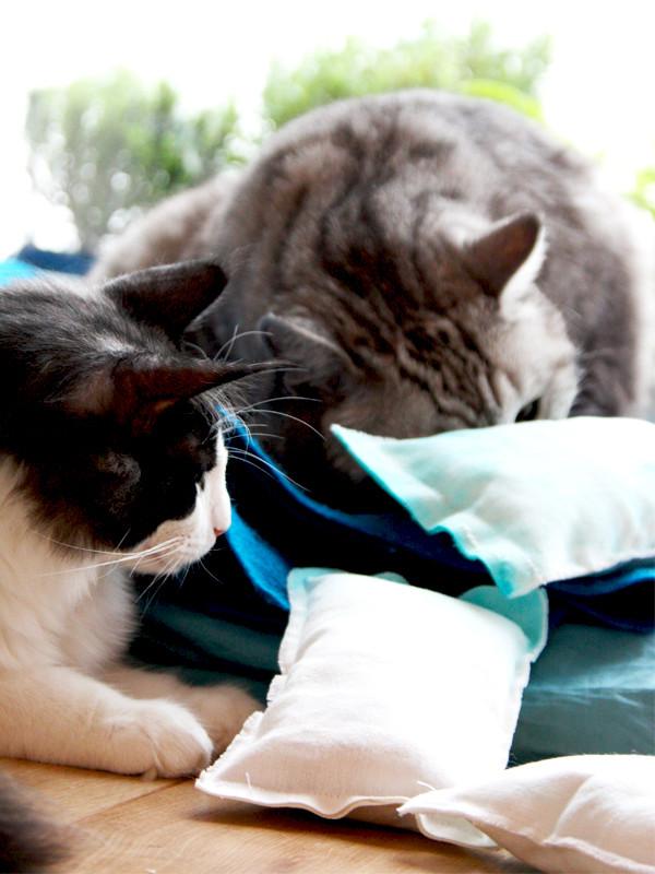 Diy Katzen  DIY für Katzen und Freunde