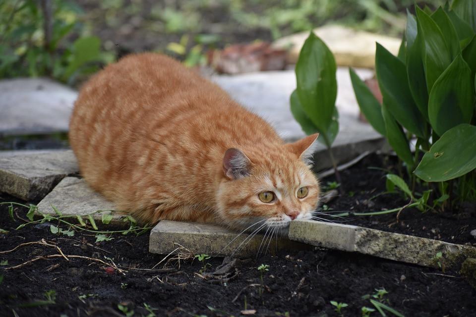 Diy Katzen  DIY – Katzen Außengehege selber bauen – Katzenblog