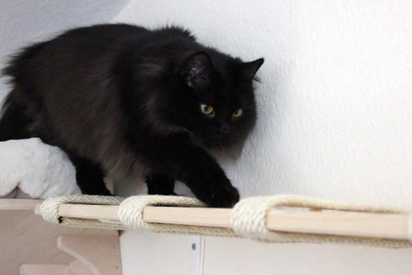 Diy Katzen  DIY Catwalk Wandbrett für Katzen