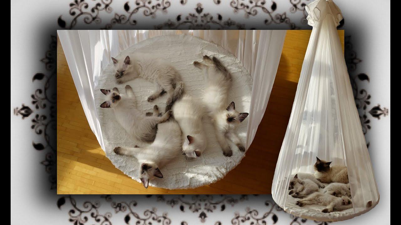 Diy Katzen  DIY 😻 Himmelbett für Katzen