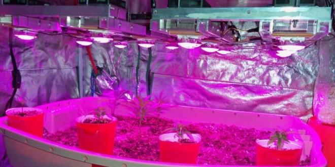 Diy Led Grow Light  10 DIY Led Grow Lights For Growing Plants Indoors – Home