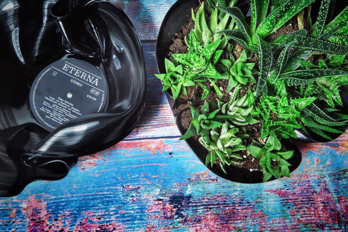 Diy Schallplatten  DIY Pflanzenschale aus Vinyl Schallplatte