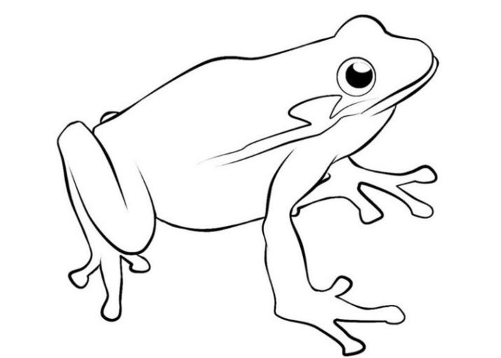 Frosch Ausmalbilder Zum Ausdrucken  Ausmalbilder zum Drucken Malvorlage Frosch kostenlos 2