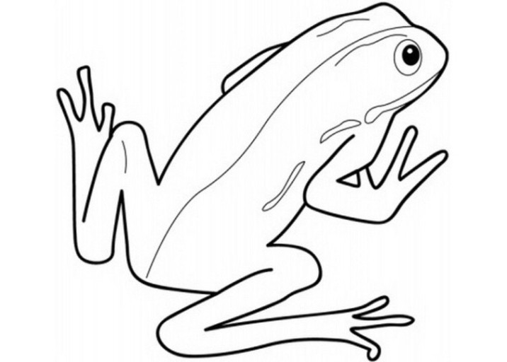 Frosch Ausmalbilder Zum Ausdrucken  Ausmalbilder Frosch Malvorlagen ausdrucken 2