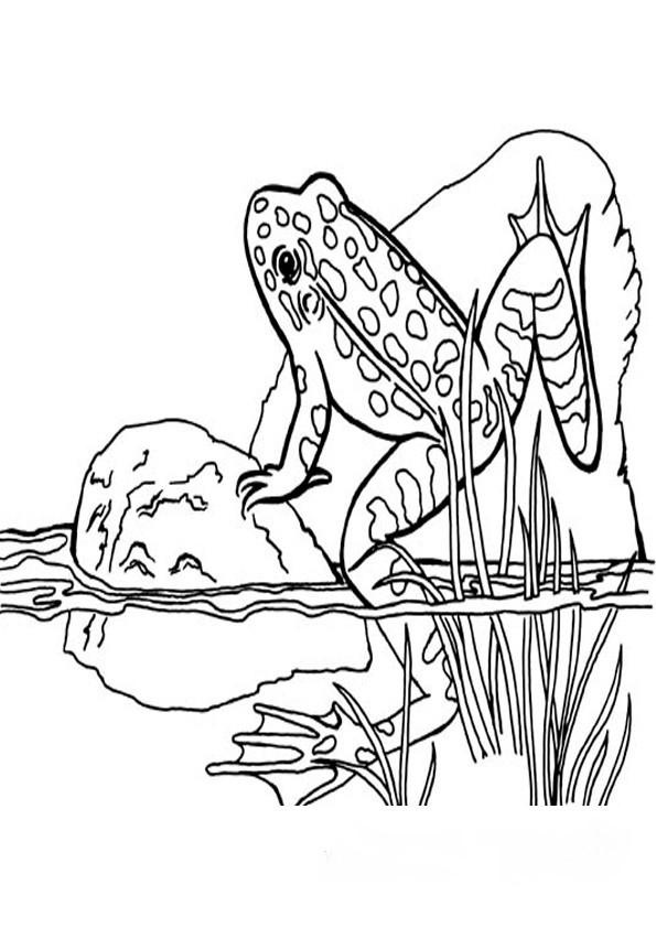 Frosch Ausmalbilder Zum Ausdrucken  malvorlagen frosch 3
