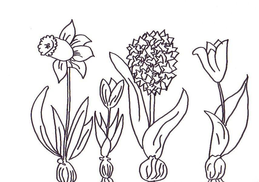 Frühlingsblumen Ausmalbilder  Ausmalbilder frühlingsblumen kostenlos Malvorlagen zum