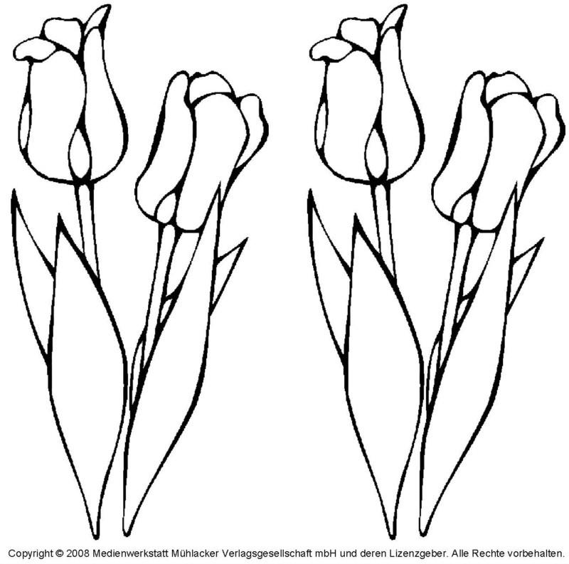 die 20 besten ideen für frühlingsblumen ausmalbilder