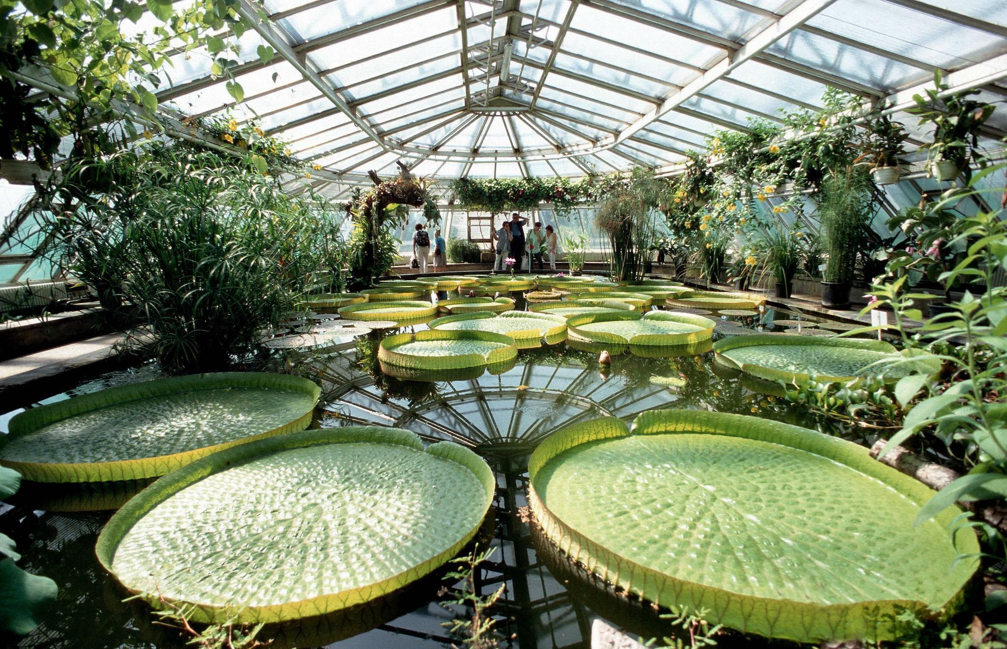 Garten Berlin  Berlin Der Botanische Garten droht finanziell