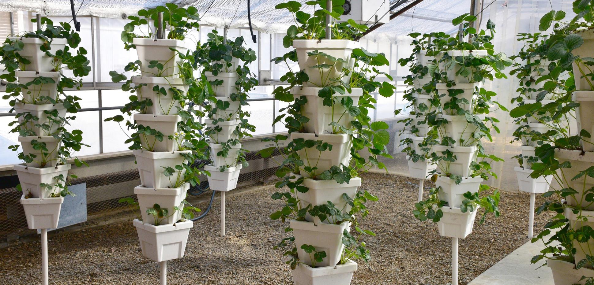 Garten Diy  Erdbeerturm selber bauen Kreative DIY Idee für den Garten