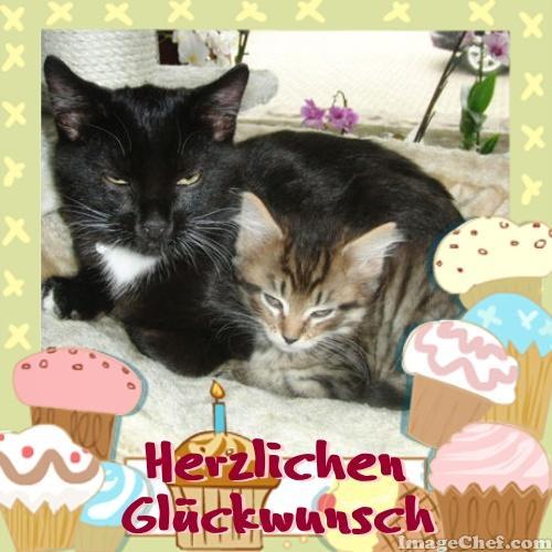 Geburtstagsbilder Mit Katzen  Geburtstagsbilder Katzen