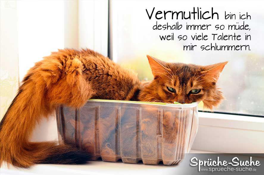 """Geburtstagsbilder Mit Katzen  Lustiges Spruchbild über s """"Müde sein"""" mit Katze"""