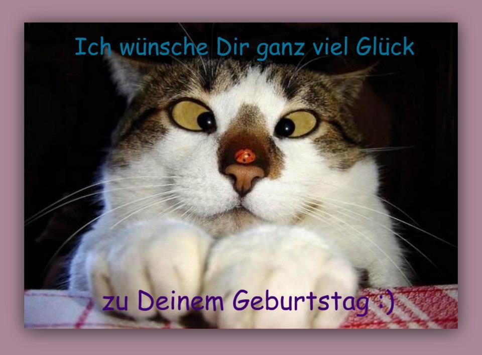 Geburtstagsbilder Mit Katzen  Witzige geburtstagsbilder Beste Geburtstagsbilder