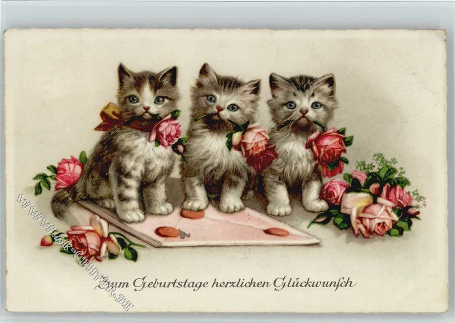 Geburtstagsbilder Mit Katzen  Bilder Geburtstag Mit Katzen