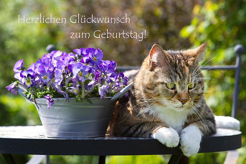 Geburtstagsbilder Mit Katzen  Geburtstag Katze Lucy Bilder