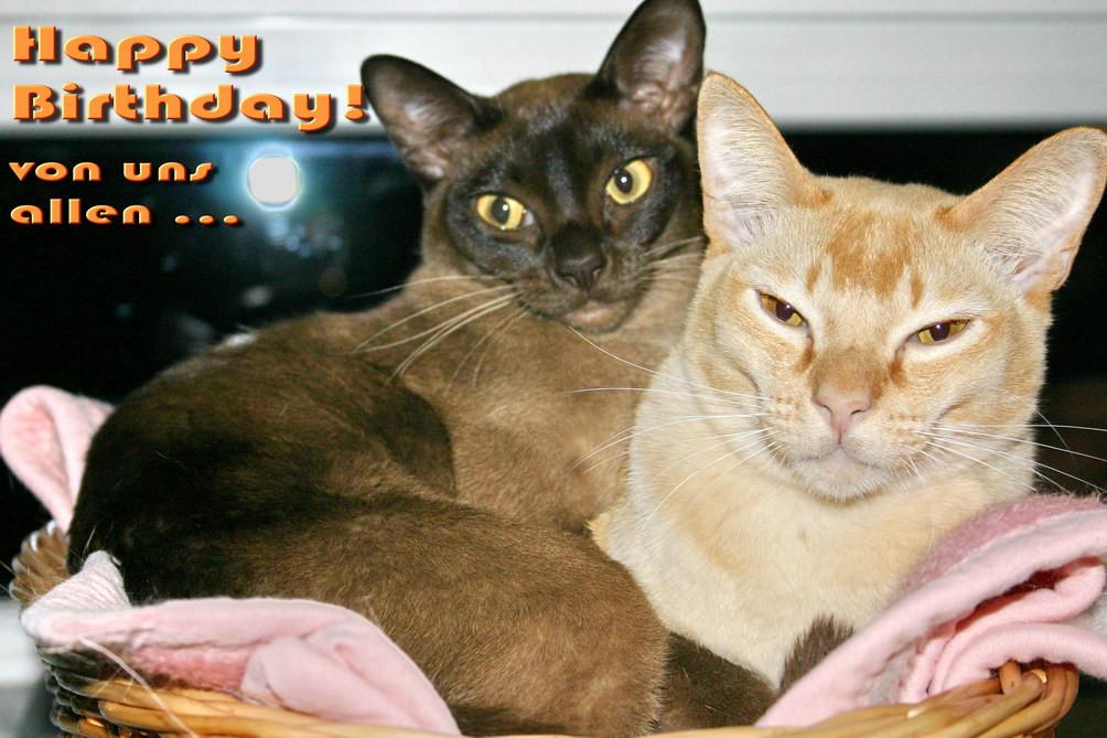 Geburtstagsbilder Mit Katzen  Kostenlose Grusskarte zum Geburtstag selbst ausdrucken