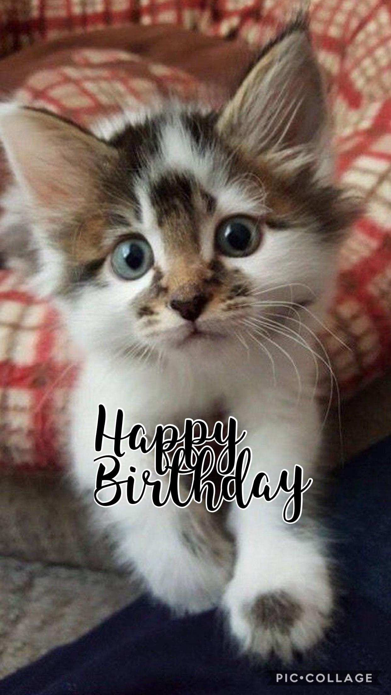 Geburtstagsbilder Mit Katzen  Lustige Geburtstagsbilder Katzen droitshumainsfo