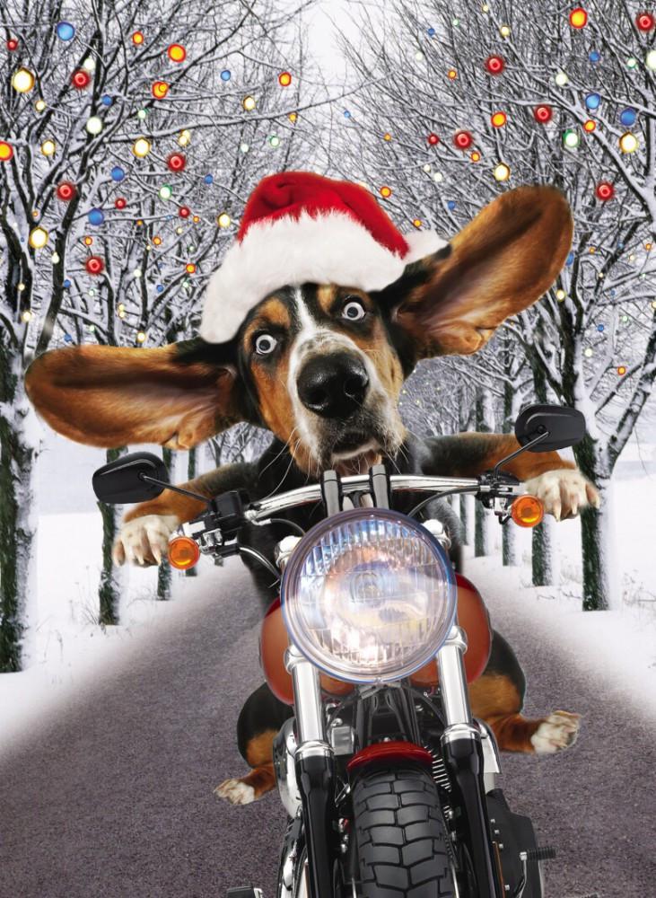 Geburtstagsbilder Motorrad  Riesen Weihnachten Humor Grußkarte Googlies Wackelaugen
