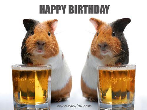 Geburtstagsbilder Tiere  Lustige Geburtstagsbilder und Happy Birthday Bilder