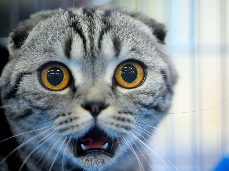 Geburtstagsbilder Tiere  Tiere schockiert Was soll uns ser Blick nur sagen