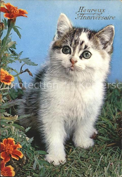 Geburtstagsbilder Tiere  AK Ansichtskarte Katzen Geburtstag Rosen Kat Tiere Nr