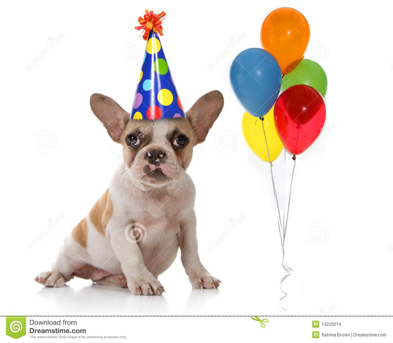 Geburtstagsfeier  Hund Mit Geburtstagsfeier Hut Und Ballonen Stockbilder