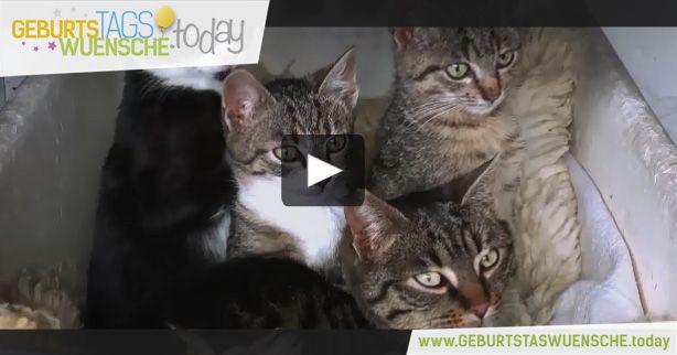 Geburtstagsglückwünsche Tiere  35 besten Geburtstagsvideos Bilder auf Pinterest