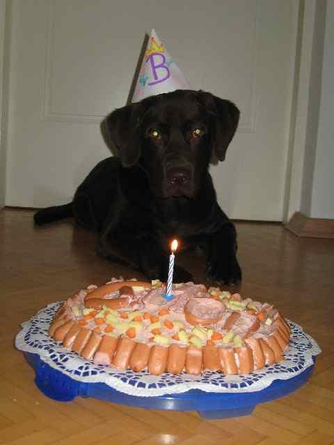 Geburtstagskuchen Hund  Geburtstagskuchen Für Hunde — Rezepte Suchen
