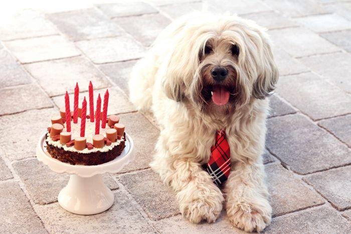 Geburtstagskuchen Hund  Hackfleisch Würstchen Torte für den Hunde Geburtstag