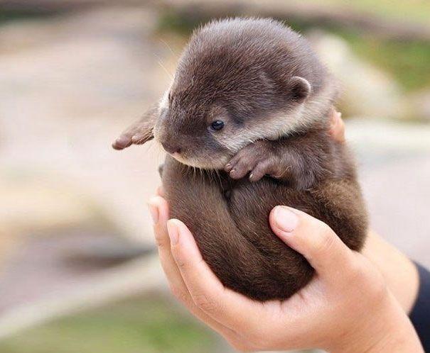 Geburtstagssprüche 20 Frech  Süß knuffig und frech Die niedlichsten Tierbabys der Welt